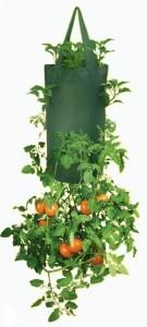 kleine-tuin-tomaten